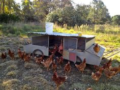 An Egg Mobile is a movable chicken house designed to house laying hens at night