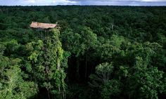 As incríveis casas na árvore da tribo Korowai