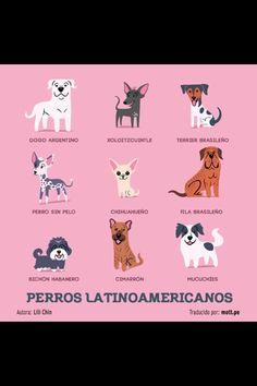 Perros Latinoamericanos
