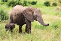 It's #WildlifeWednesday and this week we wish we could be watching this adorable duo in Tarangire National Park! 🇹🇿 Thank you to our guest Bob Ferguson for the great photo 🌍