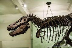 Fa uns dies ens vamllevar amb una fantàstica notícia! Un nou estudi, cita la descoberta a Olesa de Monsterratd'unconjunt de petjades que pertanyen a un grup d'arcosauromorfs, és a dir els rèptils avantpassats de cocodrils i dinosaures. Entre aquestes troballes també s'ha trobat un tipus de petjada nova a la Península Ibèrica en un estat de conservació és excepcional. Conserva les impressions de les urpes i la pell i permetrà aprofundir en els coneixements que es tenen sobre aquest animal…