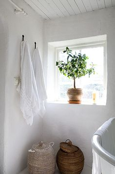 #bathroom #plant
