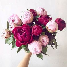 "29 Likes, 5 Comments - Grace&PeoniesDesignCo (@graceandpeoniesdesignco) on Instagram: ""These peonies!   : @peony_addict"""