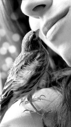 Kuş,... :))    ~&~
