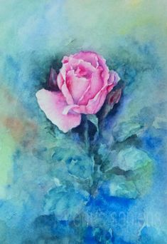 Original watercolor painting pink rose  Watercolor by VenusSapiens  #art…