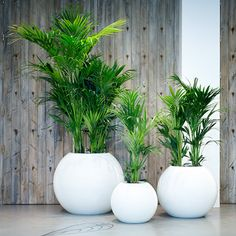 Indoor Gardening - A well kept indoor garden is a gift that keeps on giving. Not only can a good group of houseplants improve your mood and your home's air quality, they make a stylish addition to just about any space. To help… Continue Reading → House Plants Decor, Patio Plants, Indoor Plants, Hanging Plants, Interior Garden, Interior Plants, Kentia Palm, Office Plants, Deco Floral