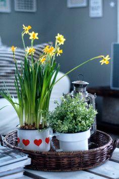Kevättä olkkariin
