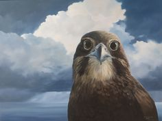 Karearea NZ Falcon  Oil on canvas Jane Sinclair