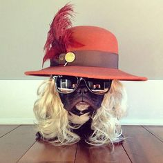 Trotter, The Fashion Forward Dog