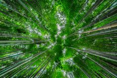 green japanese zen bamboo forest background