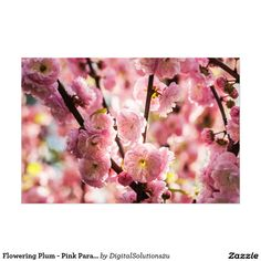 Flowering Plum - Pink Paradize Photo Print