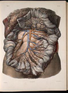 Traité complet de l'anatomie de l'homme, Marc JeanBourgery  Illustrations by: Nicolas Henri Jacob  lithography, with hand-colouring