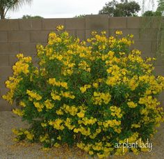 AZPlantLady Blog...for those of us crazy enough to garden in Southern AZ