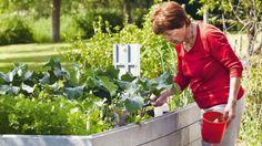 Vyvýšené záhony - zakladanie, pestovanie a vyhody