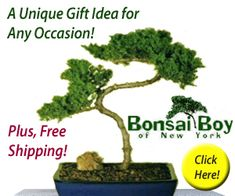 Bonsai Gift christmas: Make a special Gift To your Love Ones now     ...