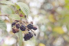 blackberries and bokeh