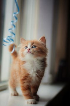 Adorable Kittens And Dogs into Cute Animals Cartoon Black And White some Cute Animals To Draw Kawaii save Cute Baby Kittens Facts Cute Cats And Kittens, Baby Cats, I Love Cats, Kittens Cutest, Ragdoll Kittens, Funny Kittens, Bengal Cats, Kitty Cats, Chat Maine Coon