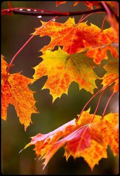 autumn's gold…