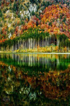 Autumn Forest. By Gerhard Vlcek.