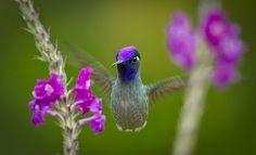 20 imágenes bonitas para ver, disfrutar y compartir (fotos) | Banco de Imagenes (shared via SlingPic)