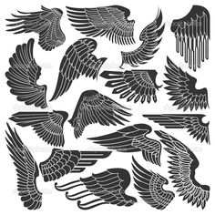 Set sketches of wings - Stock Illustration: 13354976