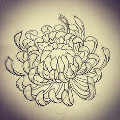Chrysanthemum sketch by Rebekka Rekkless via @rebekkarekkless on Instagram. Tattoo apprentice at Adorned Tattoo