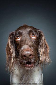 Tender Portraits of Skeptical Dogs – Fubiz Media