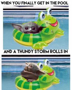 Star Wars Meme, Good Jokes, Funny Jokes, Hilarious, Yoda Meme, Yoda Gif, Fat Animals, Background Diy, Starwars