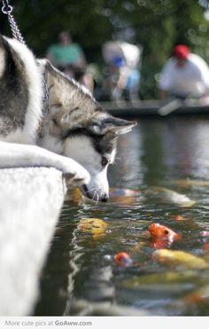 Hello Fish, I'm dog - goaww.com