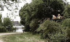Tree house for birds!