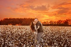 cotton fields on fire | a cotton field family session | kansas studios | kansas pitts photography