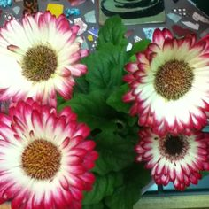 A nice Gerber Daisy I just found at Lowes.