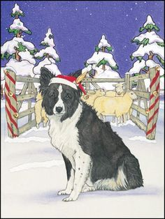 Border Collie Christmas Cards Border Collie Christmas Ornaments