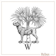 Hand drawn bespoke crest with a labrador, silver thatch palm tree and W initial, custom designed for a signet ring engraving. Ring Engraving, Engraved Rings, Crests, Signet Ring, Palm Trees, Bespoke, Hand Drawn, Labrador, Seal