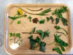 Suomen luonto on täynnä ilmaista ruokaa. Kuva: Kiia Renko. Preserves, Vegetarian Recipes, Things To Do, Herbs, Drinks, Tableware, Food, Nature, Things To Make