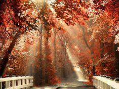 Rays through the Fall leaves