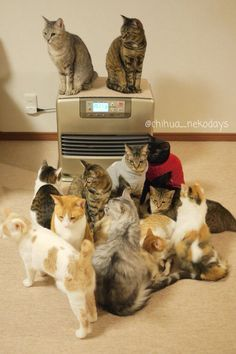 cat gathering for heater or aircon?