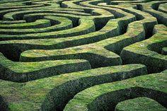 Alice maze in Disney Paris