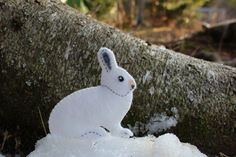 One of the things I enjoy most about winter is being able to easily follow and identify the tracks of the critters who live in our woods. The snowshoe hare has already made an appearance in the dar…