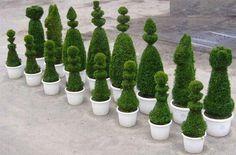 Nature Chess (Nice but I wouldn't want to keep it trimmed up)