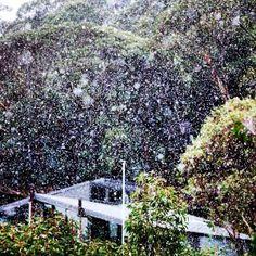 First snow falling for 2014, Falls Creek, Victoria Taken by @FallsCreekAust 2/5/2014