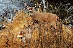 Deer Hunting: 8 Rut Myths Busted | Outdoor Life