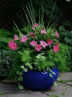 Container Gardening Rio dipladenias, pink blooms with sprengerii fern and dracaena spike accents. These dipladenias are drought tolerant, low maintenance and require no deadheading. Container Herb Garden, Container Gardening Vegetables, Container Flowers, Container Plants, Vegetable Gardening, Organic Gardening, Gardening Hacks, Gardening Supplies, Outdoor Flowers