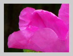 'pinkfloral pp' von Rudolf Büttner bei artflakes.com als Poster oder Kunstdruck $18.71