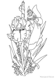 Fairies - 999 Coloring Pages