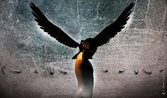 The Bird 1