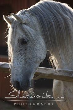 Kůň nepostrádající také temperament