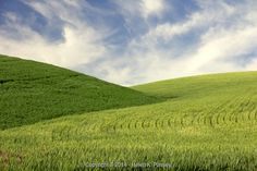 Week of 9/14/15, Two Hills of Young Wheat - Stock Photos & Images | Stockafe.com