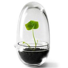 Grow vekstkuppel - glass - Design House Stockholm