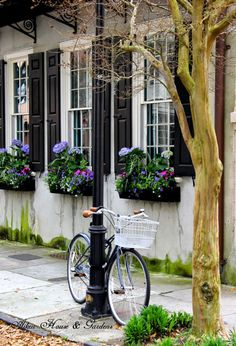 Aiken House & Gardens: Window Boxes and Container Ideas #hydrangeas in window boxes